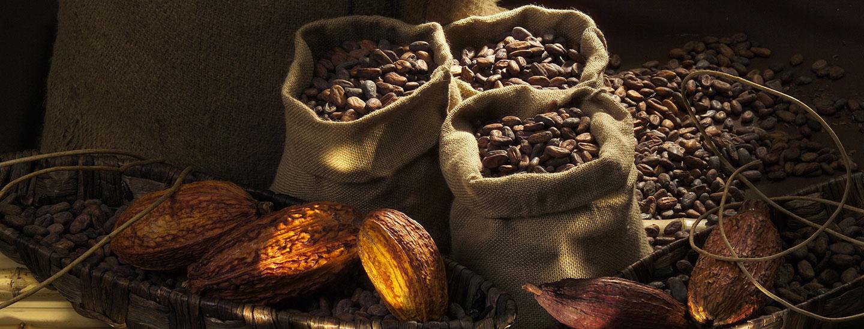 Beste Cacao Bohnen für Lindt Schokolade