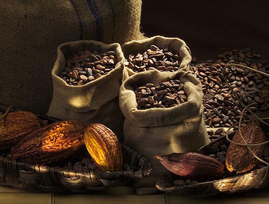 Meilers fezes de cacao pour le chocolat lindt